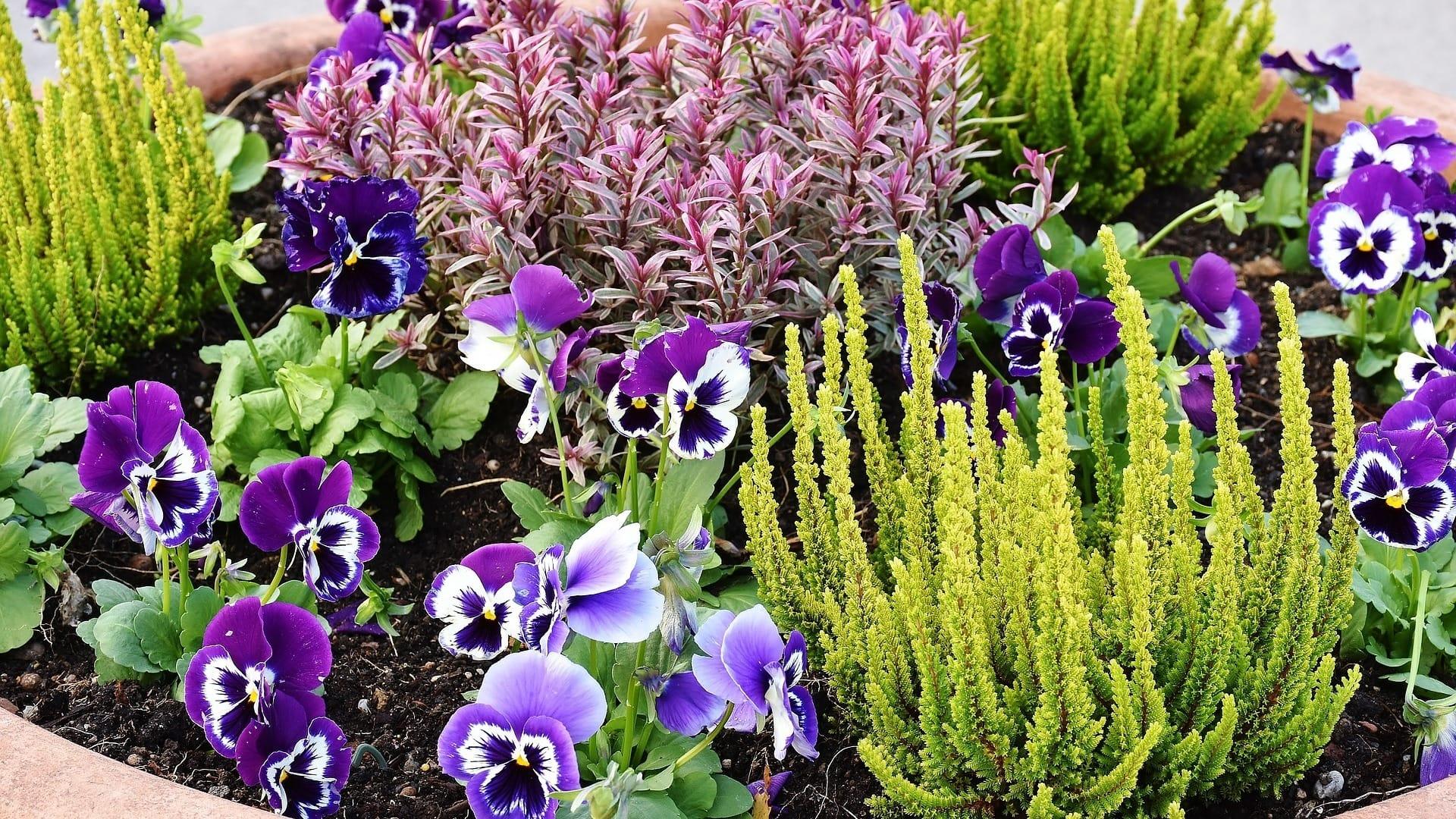Alberi Nani Da Giardino i migliori 27 giardinieri per piante da giardino a latina