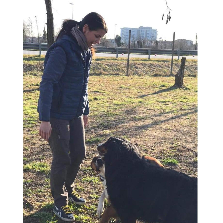 I Migliori 31 Dog Sitter A Castelfranco Veneto Con Preventivi Gratuiti