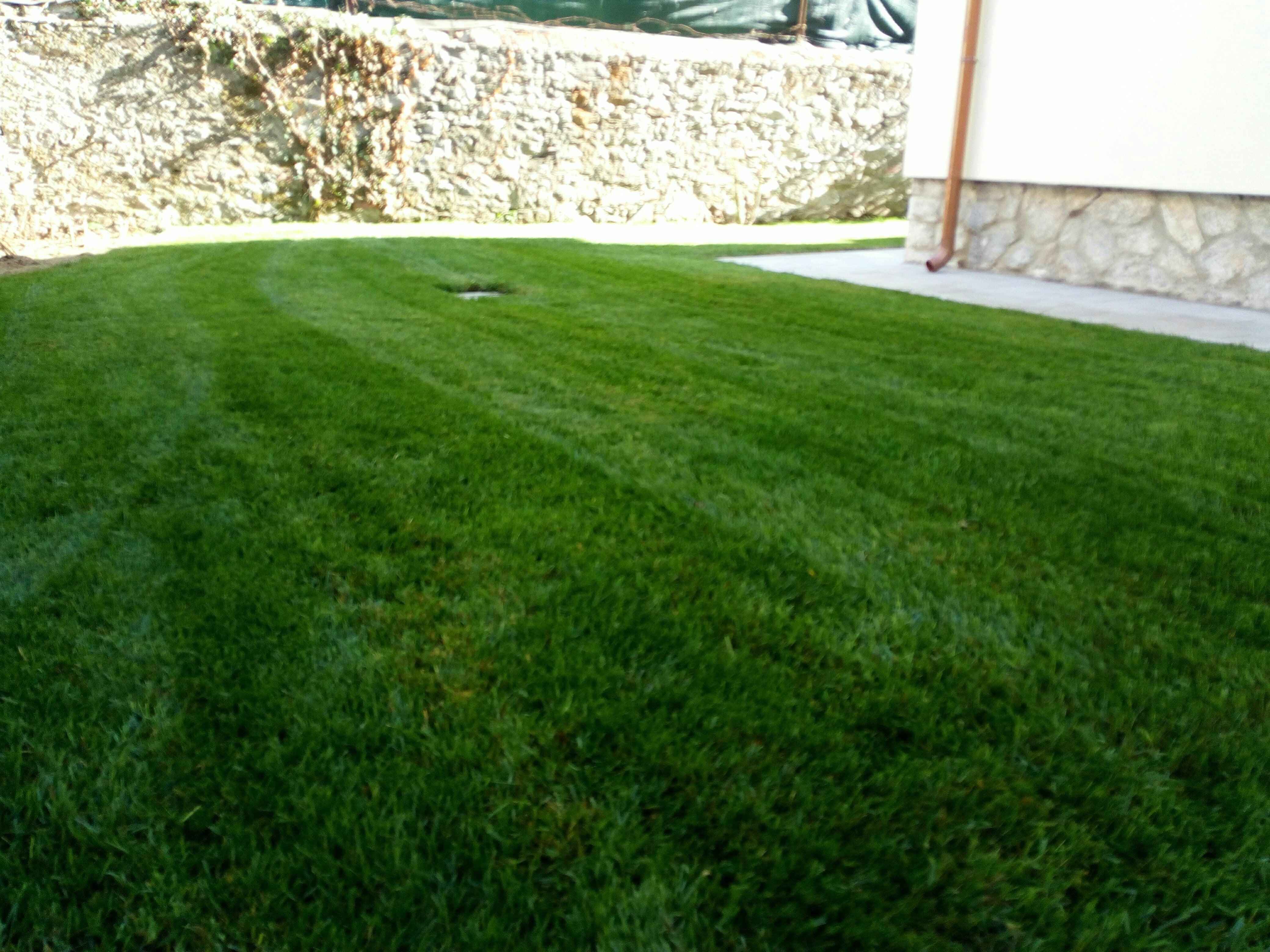 I migliori esperti in arredo giardino a pisa con preventivi