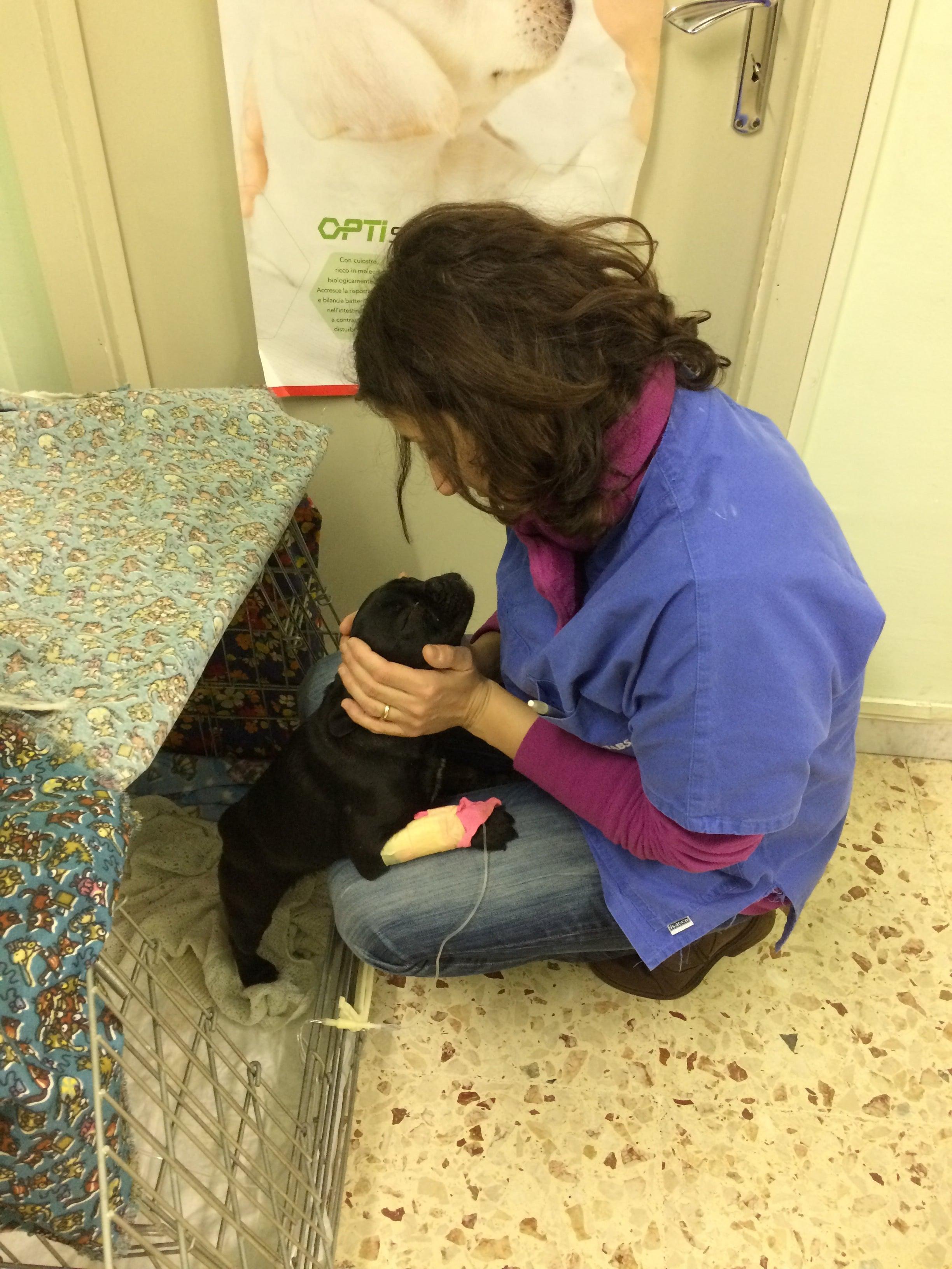 Veterinario a Catania i migliori 32 veterinari Costo veterinario e vaccinazione