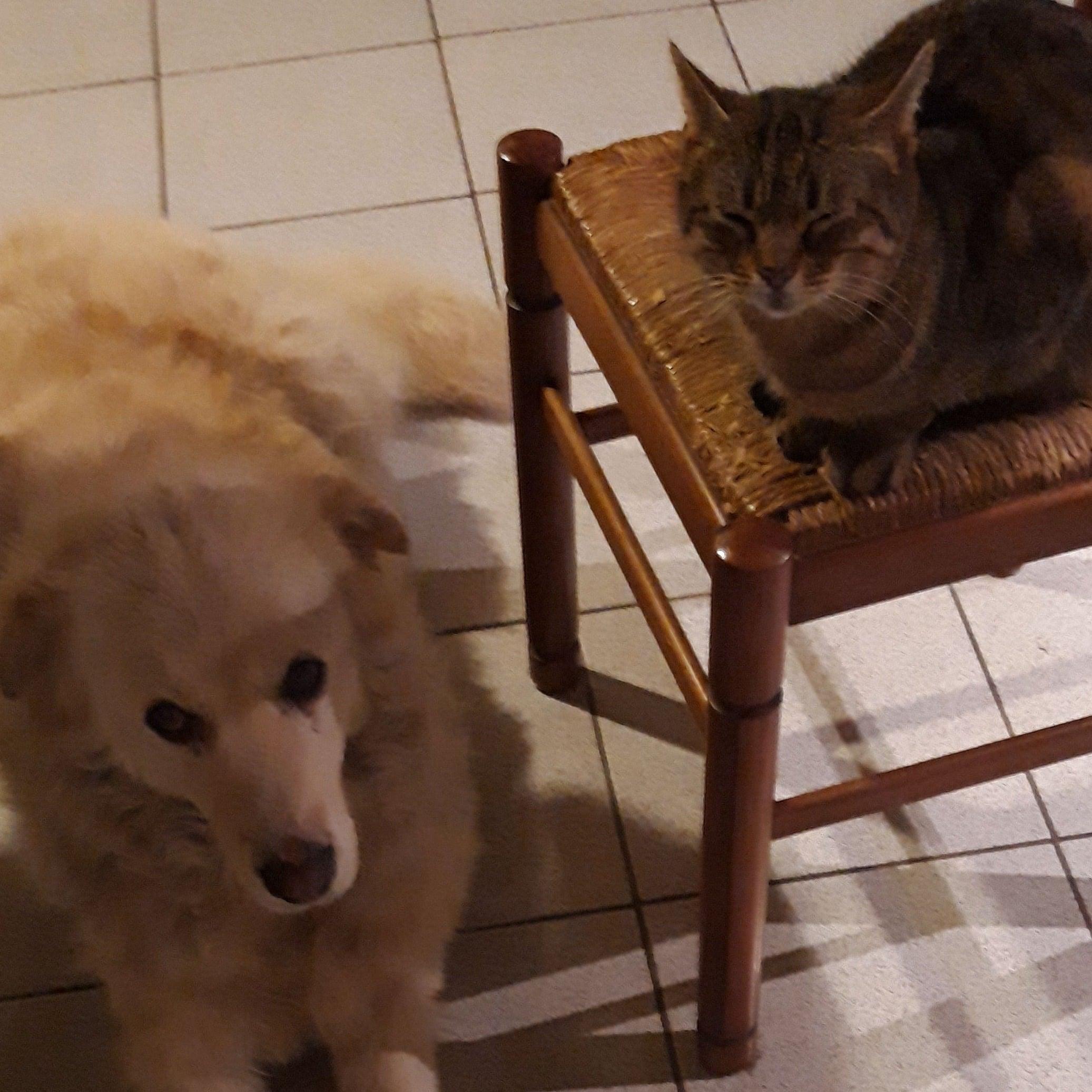 I Migliori 28 Dog Sitter A Adria Con Preventivi Gratuiti