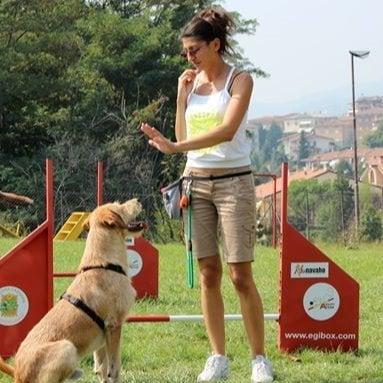 I Migliori 20 Servizi Di Toelettatura Cani A Brescia Con Preventivi