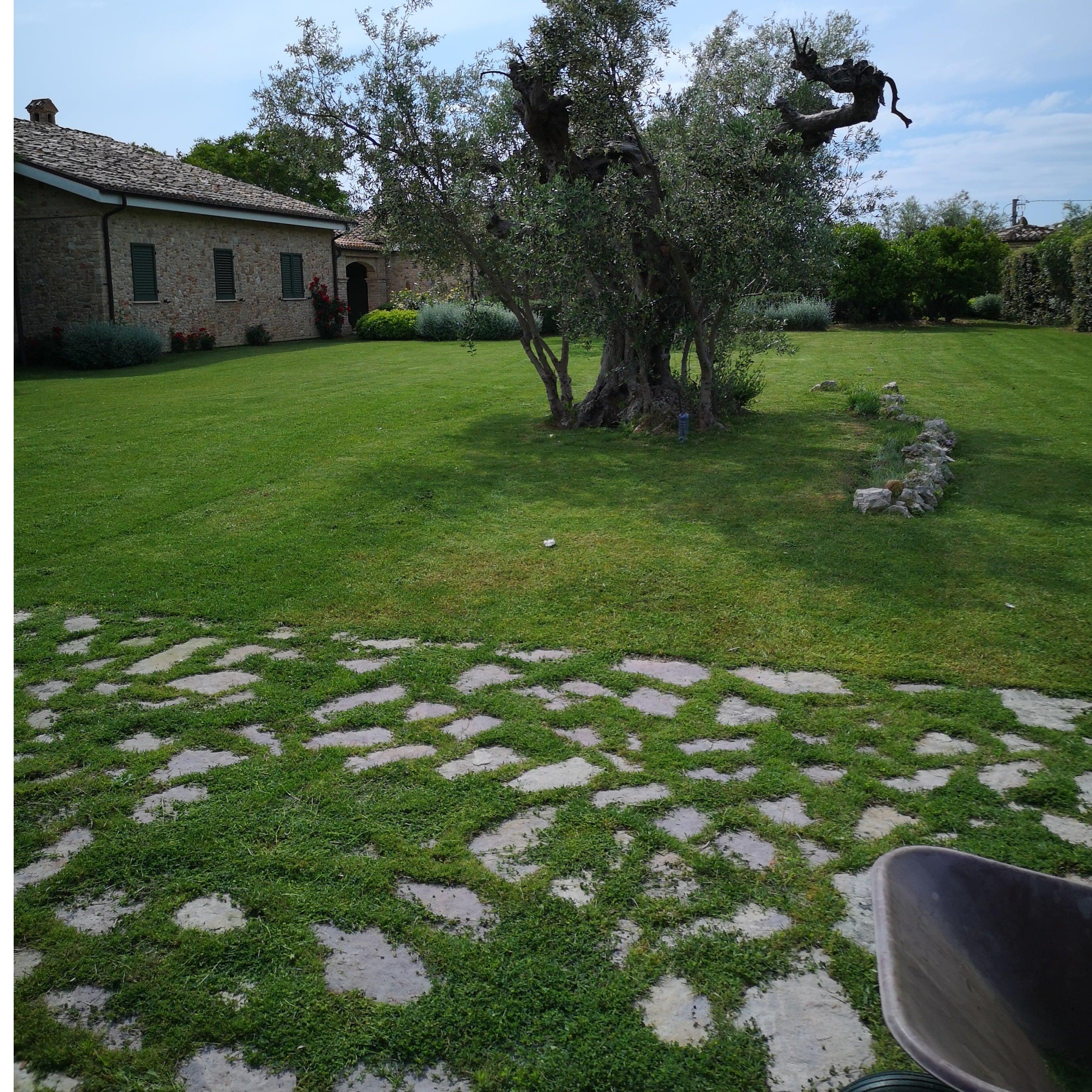 I Migliori 21 Servizi Di Giardinaggio A Alba Adriatica Con