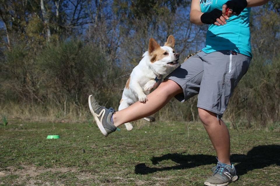 I Migliori 20 Corsi Addestramento Cani A Aprilia Con Preventivi