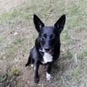 microchip cane - Sono amante di cani  massima disponibilita
