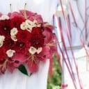 piante - Fiori, bomboniere, allestimento party e matrimoni
